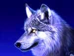 WolfABLe
