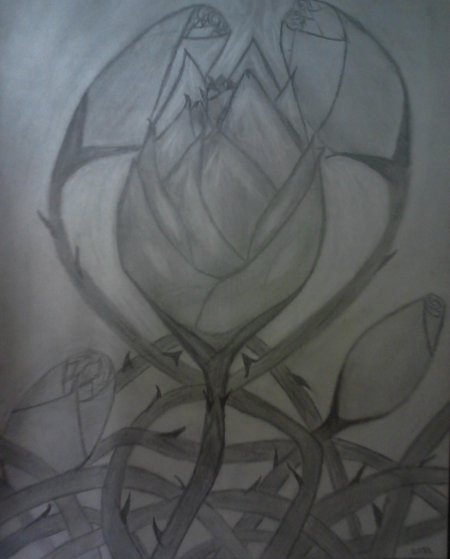 Narcissus1881