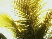 Brazilian Hunk In Paradise